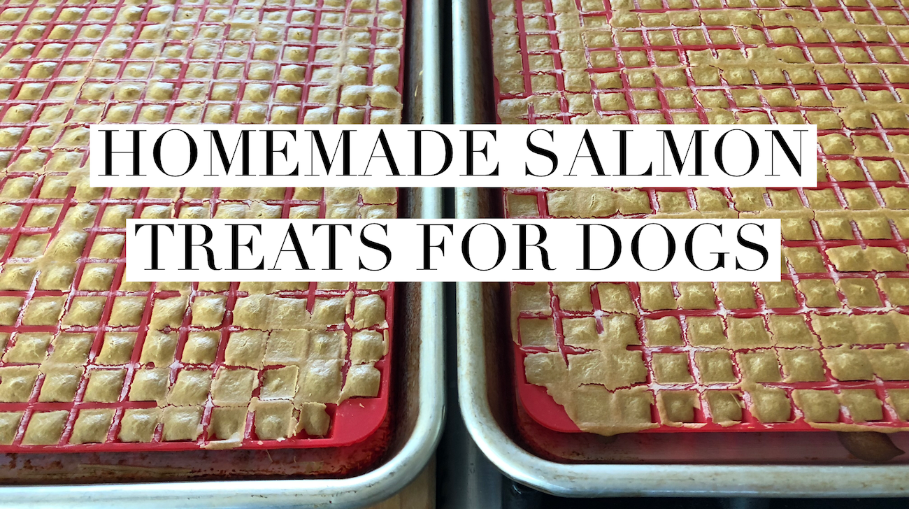 Making Homemade Salmon Treats for Dogs with Kids